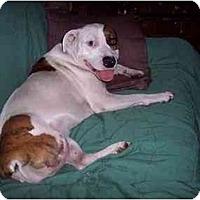 Adopt A Pet :: Sadie - Groveland, FL