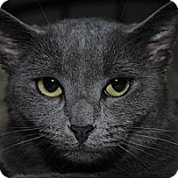 Adopt A Pet :: Lexi - Waxhaw, NC