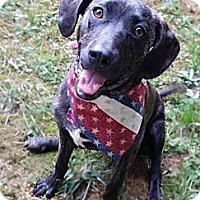 Adopt A Pet :: Violet - Snellville, GA