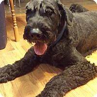 Adopt A Pet :: Sebastian - Springfield, MO
