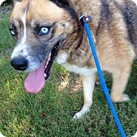 Adopt A Pet :: Shiba - Byhalia, MS