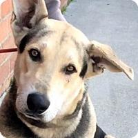 Adopt A Pet :: GRAYSON (video) - Los Angeles, CA