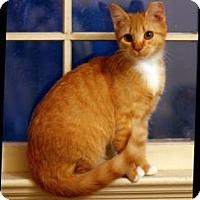 Adopt A Pet :: Peaches - Richmond, VA
