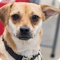 Adopt A Pet :: Marlo - Minneapolis, MN