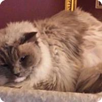 Adopt A Pet :: Bella Eve - Ennis, TX