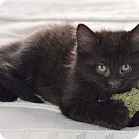 Adopt A Pet :: Pogo - Merrifield, VA
