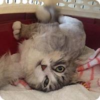 Adopt A Pet :: Steve - Edmonton, AB