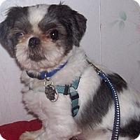 Adopt A Pet :: Solomon - Jacksonville, FL