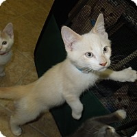 Adopt A Pet :: Angel - Medina, OH