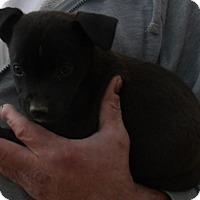 Adopt A Pet :: GINA - Corona, CA
