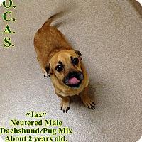Adopt A Pet :: 2-6 Jax - Triadelphia, WV
