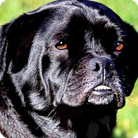 Adopt A Pet :: MISS CLEO(THE LITTLE PRINCESS! - Wakefield, RI