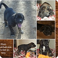Adopt A Pet :: Smokey meet me 1/22 - East Hartford, CT