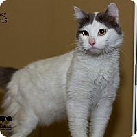 Adopt A Pet :: Harvey - Baton Rouge, LA