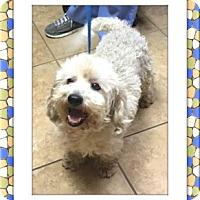 Adopt A Pet :: Bistro - TX - Tulsa, OK