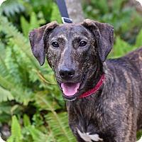 Adopt A Pet :: Alaya - Baton Rouge, LA