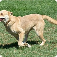 Adopt A Pet :: Phil - Palm Springs, CA