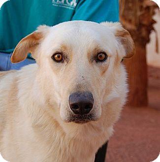 Labrador Retriever Mix Dog for adoption in Las Vegas, Nevada - Victor
