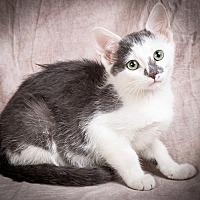 Adopt A Pet :: PANDORA - Anna, IL