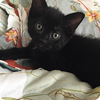 Adopt A Pet :: Melody - Geneseo, IL