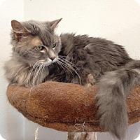 Adopt A Pet :: Tiana - Colorado Springs, CO