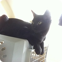 Adopt A Pet :: Bungee - St. Louis, MO