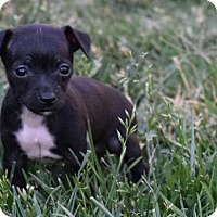 Adopt A Pet :: Tyra Banks - Sacramento, CA