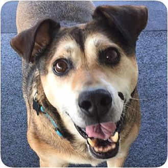 Shepherd (Unknown Type) Mix Dog for adoption in Ithaca, New York - Hadley