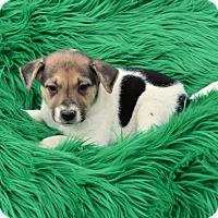 Adopt A Pet :: Beck - Groton, MA