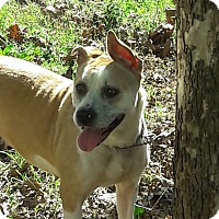 Adopt A Pet :: Caramel - Greensboro, NC
