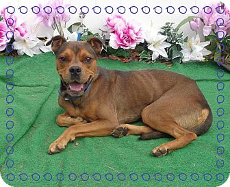 Boxer Mix Dog for adoption in Marietta, Georgia - JAGUAR - adopted @ off-site