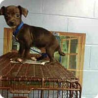 Adopt A Pet :: URGENT on 12/7 SAN BERNARDINO - San Bernardino, CA