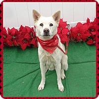 Adopt A Pet :: ASPEN - Marietta, GA
