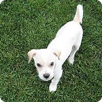 Adopt A Pet :: Finn - San Jose, CA