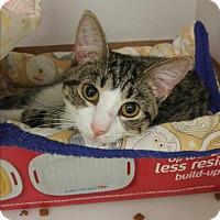 Adopt A Pet :: Kiwi - Neosho, MO