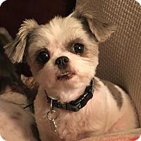 Adopt A Pet :: Angel 3247 - Toronto, ON