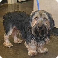 Adopt A Pet :: Albert - McKinney, TX