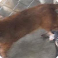 Adopt A Pet :: Fritzy - Bonifay, FL