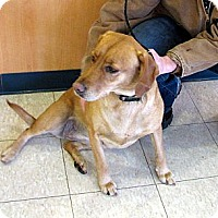 Adopt A Pet :: Willow - Ludington, MI