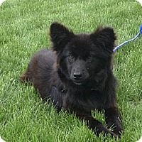 Adopt A Pet :: Ebony - Westbank, BC