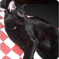 Adopt A Pet :: Ashleigh - Richmond, VA