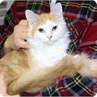 Adopt A Pet :: Sawyer - Arlington, VA
