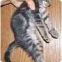 Adopt A Pet :: Chimera - Dallas, TX