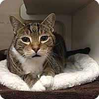 Adopt A Pet :: Riley - St. Petersburg, FL
