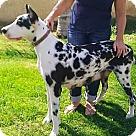Adopt A Pet :: Fiona