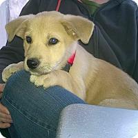 Adopt A Pet :: Butternut - Austin, TX