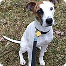Adopt A Pet :: Archie