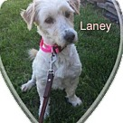 Adopt A Pet :: Laney
