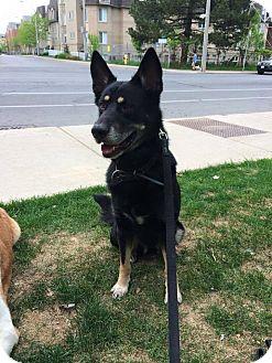 Dog Adoption Peterborough Ontario