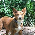 Adopt A Pet :: Simone Bates